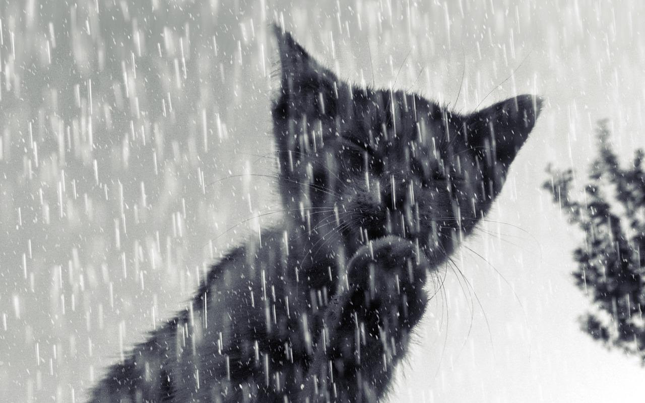 Ne sortez plus sans votre parapluie chat